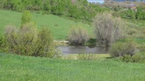 Whitewood pond